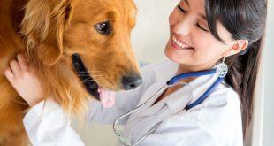 Học đại học thú y nói không với thất nghiệp